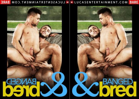 Banged & Bred 2018 Full HD Gay DVD